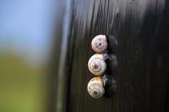 Σαλιγκάρια Στοκ Φωτογραφίες