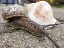 Σαλιγκάρι και το κοχύλι θάλασσας στοκ εικόνα με δικαίωμα ελεύθερης χρήσης