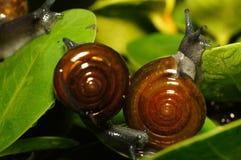 Σαλιγκάρι και φίλος Στοκ εικόνα με δικαίωμα ελεύθερης χρήσης
