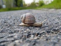 Σαλιγκάρι με ένα κοχύλι στο δρόμο Στοκ εικόνες με δικαίωμα ελεύθερης χρήσης