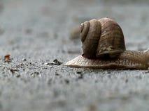 Σαλιγκάρι που ερευνά το περιβάλλον απόθεμα βίντεο