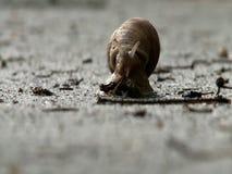 Σαλιγκάρι που ερευνά το περιβάλλον φιλμ μικρού μήκους