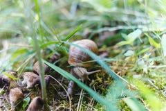 Σαλιγκάρι που σέρνεται στο δάσος Στοκ φωτογραφία με δικαίωμα ελεύθερης χρήσης