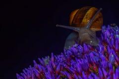 Σαλιγκάρι στη νύχτα στοκ εικόνες
