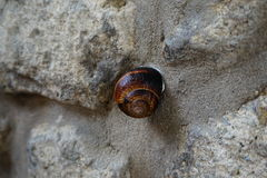 Σαλιγκάρι στους βράχους! στοκ εικόνες