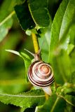 Σαλιγκάρι στους κήπους Edwards Στοκ φωτογραφία με δικαίωμα ελεύθερης χρήσης