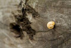 Σαλιγκάρι στο δάσος Στοκ Εικόνες