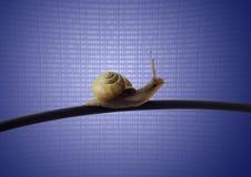 Σαλιγκάρι στο καλώδιο ethernet Στοκ εικόνες με δικαίωμα ελεύθερης χρήσης