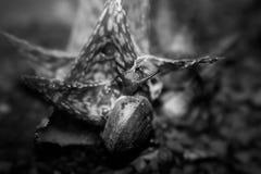 Σαλιγκάρι στο Μαύρο στοκ φωτογραφίες με δικαίωμα ελεύθερης χρήσης