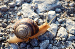 Σαλιγκάρι στο δρόμο Στοκ Εικόνες