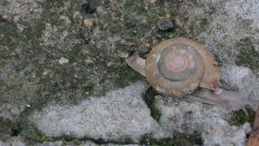 Σαλιγκάρι στο συγκεκριμένο έδαφος, κινηματογράφηση σε πρώτο πλάνο απόθεμα βίντεο