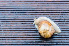 Σαλιγκάρι στο υγρό πεζούλι Στοκ φωτογραφίες με δικαίωμα ελεύθερης χρήσης