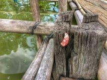 Σαλιγκάρι της Sherry στο ξύλο Στοκ Φωτογραφία