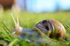Σαλιγκάρι Στοκ φωτογραφία με δικαίωμα ελεύθερης χρήσης