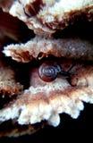 Σαλιγκάρι Στοκ Φωτογραφία