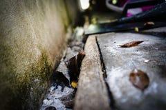 Σαλιγκάρι Στοκ εικόνα με δικαίωμα ελεύθερης χρήσης