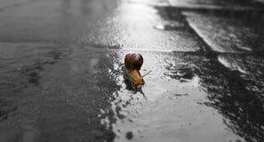 Σαλιγκάρι Στοκ Φωτογραφίες