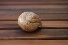 Σαλιγκάρι Shell, Στοκ φωτογραφία με δικαίωμα ελεύθερης χρήσης