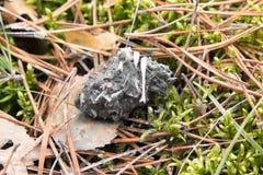 Σβόλος - undigested τρόφιμα του αρπακτικού πουλιού στοκ φωτογραφία με δικαίωμα ελεύθερης χρήσης