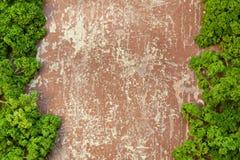 Σγουρός μαϊντανός στο ξύλινο υπόβαθρο Στοκ Εικόνες