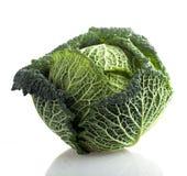 σγουρός πράσινος λάχανων Στοκ Φωτογραφίες