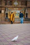 Σεβίλη, Ανδαλουσία, Ισπανία - περιστέρι σε Plaza της Ισπανίας στη Σεβίλη Στοκ φωτογραφία με δικαίωμα ελεύθερης χρήσης