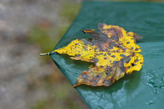 Σεβασμοί φθινοπώρου Στοκ Εικόνα