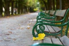 Σεβασμοί φθινοπώρου Στοκ Εικόνες