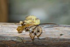 Σεβασμοί φθινοπώρου Στοκ φωτογραφία με δικαίωμα ελεύθερης χρήσης