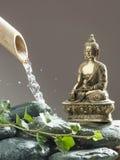 Σεβασμός του περιβάλλοντος με την τοποθέτηση zen Στοκ Εικόνες