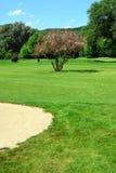 σειράς μαθημάτων ανθίζοντας δέντρο άμμου κοιλωμάτων γκολφ ρόδινο Στοκ εικόνα με δικαίωμα ελεύθερης χρήσης