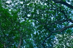 Σειρά βοτανικών κήπων της Σιγκαπούρης - στοκ εικόνες
