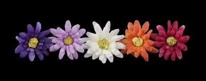 σειρά λουλουδιών Στοκ εικόνα με δικαίωμα ελεύθερης χρήσης