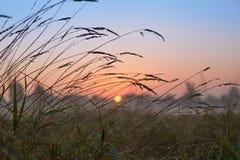 Σειρά ομιχλώδους πρωινού φθινοπώρου τοπίων στοκ φωτογραφίες με δικαίωμα ελεύθερης χρήσης