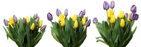 Σειρά λουλουδιών τουλιπών Στοκ φωτογραφίες με δικαίωμα ελεύθερης χρήσης