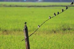 Σειρά πουλιών Στοκ Εικόνα