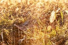 Σειρά του Ιστού το ομιχλώδες πρωί φθινοπώρου στοκ εικόνα