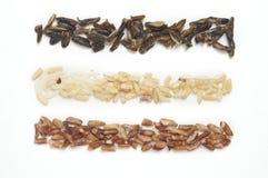 σειρά τρία ρυζιού τύποι στοκ εικόνα με δικαίωμα ελεύθερης χρήσης