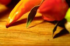 Σειρά των τσίλι και των πιπεριών Στοκ φωτογραφία με δικαίωμα ελεύθερης χρήσης