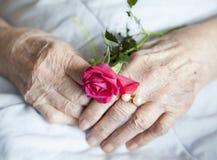 Χέρια της ηλικιωμένης κυρίας με τις ροδαλός-σειρές φωτογραφιών Στοκ Εικόνες
