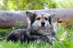 σειρά χλόης σκυλιών ζώων Στοκ εικόνες με δικαίωμα ελεύθερης χρήσης