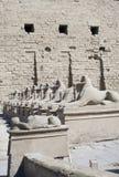 σειρά sphinx Στοκ Φωτογραφίες