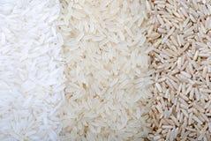 σειρές ρυζιού τρεις ποικιλίες Στοκ εικόνα με δικαίωμα ελεύθερης χρήσης