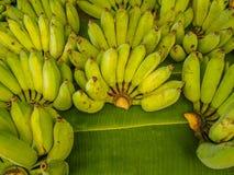 Σειρές της μπανάνας Στοκ Φωτογραφίες
