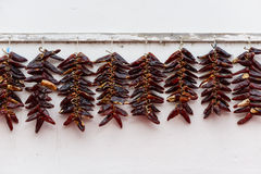 Σειρές της ξήρανσης πιπεριών Espelette Στοκ Εικόνα