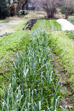 Σειρές της πράσινης βλάστησης στο μικρό αγρόκτημα Στοκ εικόνα με δικαίωμα ελεύθερης χρήσης