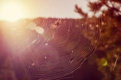 Σειρές του Ιστού μιας αράχνης στο πίσω φως στο δάσος Στοκ Εικόνες
