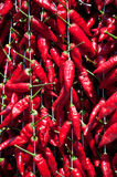 Σειρές του κοκκίνου - καυτό πιπέρι έτοιμο για την πώληση Στοκ Φωτογραφίες