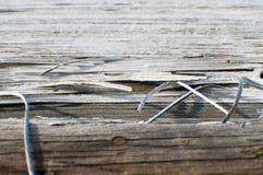 Σειρές του φράκτη Στοκ φωτογραφίες με δικαίωμα ελεύθερης χρήσης