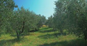 Σειρές των δέντρων στον κήπο πετρελαίου απόθεμα βίντεο